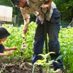 Healthy Gardening